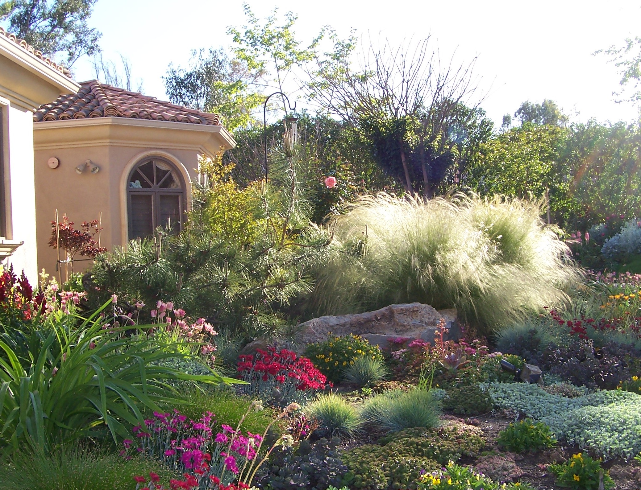 Oman landscape home landscaping designs in san diego for Front yard plant ideas