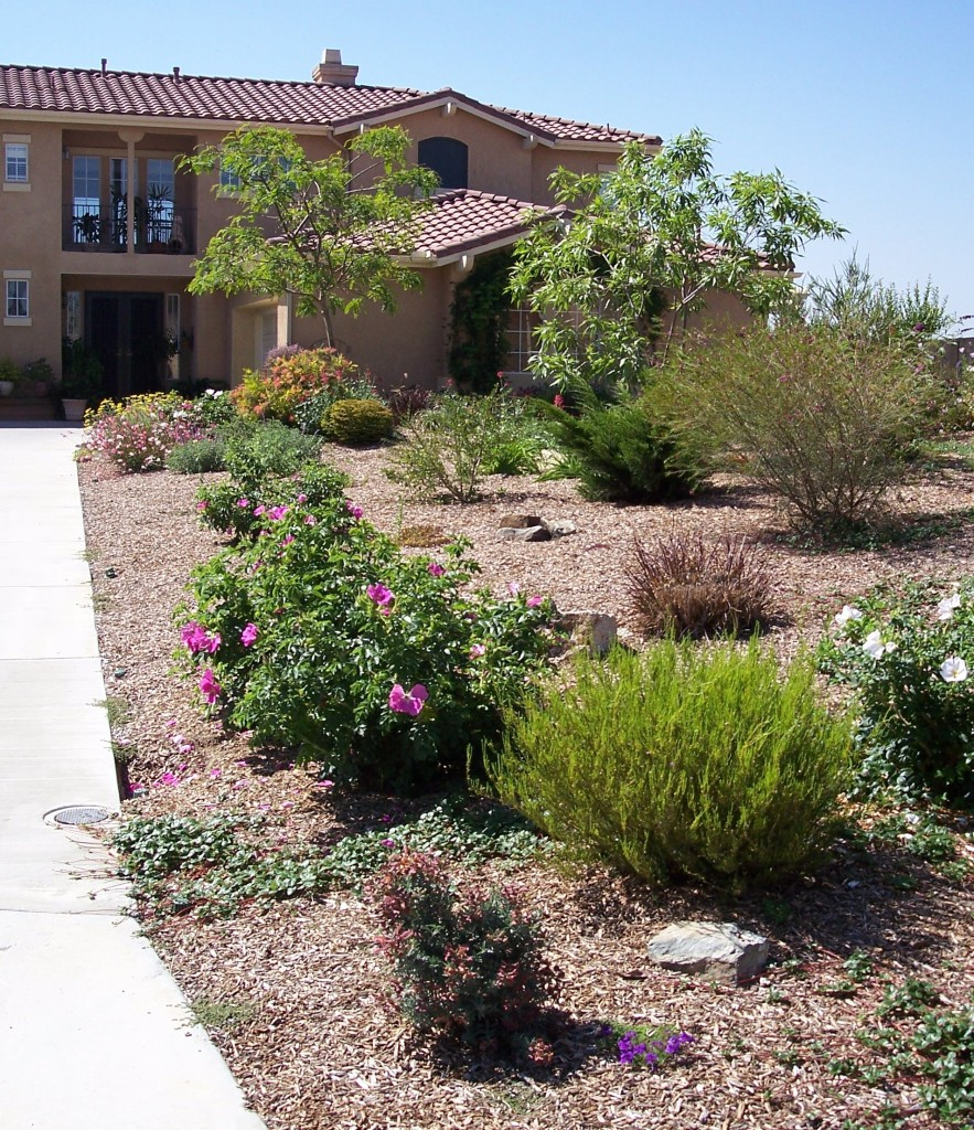 Front Yard After Introduction Of Trees And Other Colorful